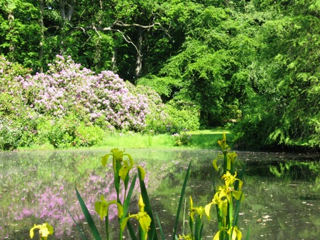 Rhododendronpark Lütetsburg